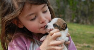 Jack Russell Terriers and children