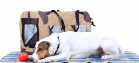 Jack Russel Terrier First Aid Kit