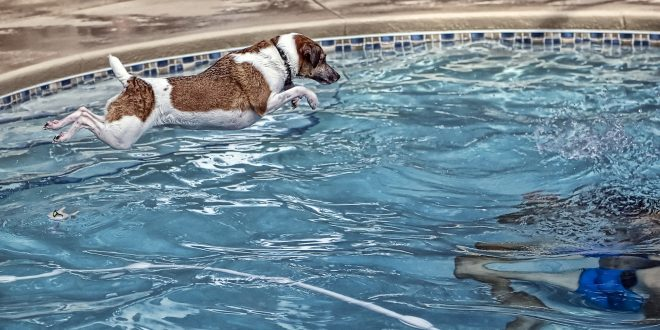 Dog pool rules