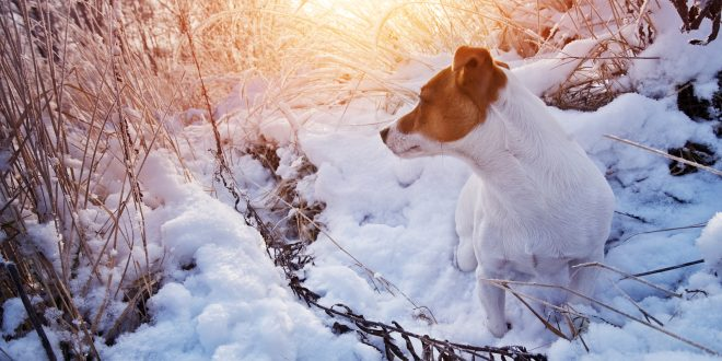 snow fun with your dog
