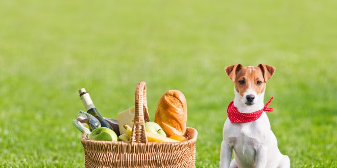 Supplementing Dog Nutrition